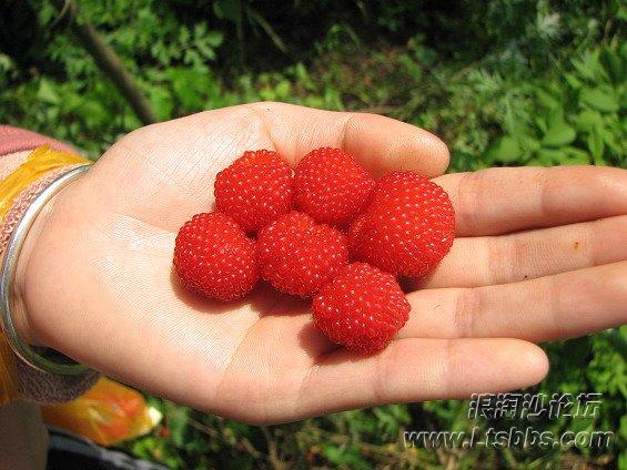 野生草莓1.jpg