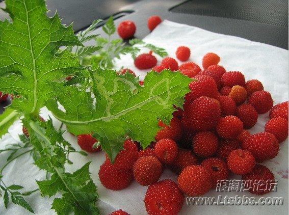 野生草莓2.jpg